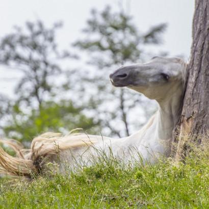 Dermite estivale du cheval : comment réagir