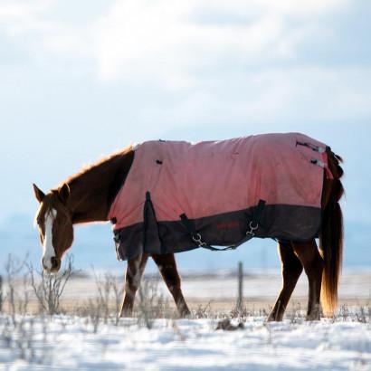 Cheval en hiver : comment le préparer