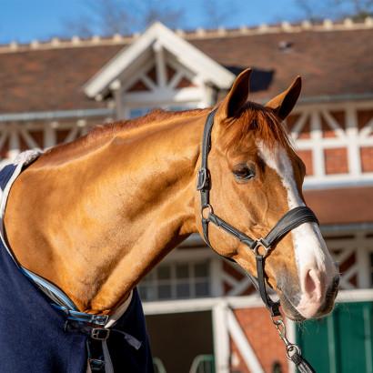 Couverture cheval : comment choisir ?