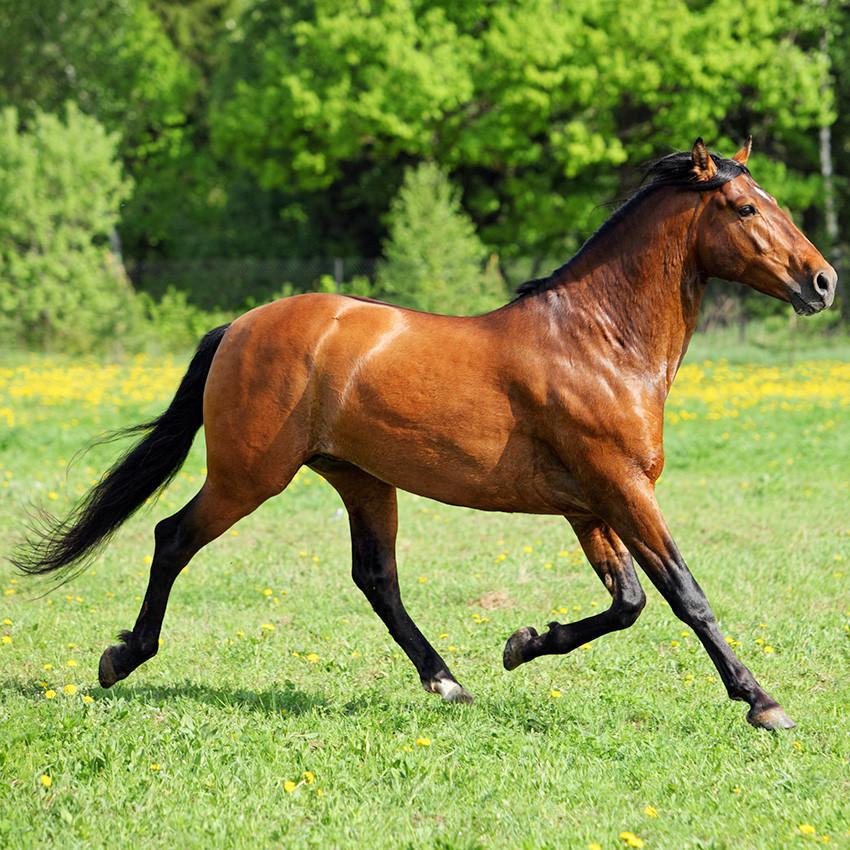 Retraite du cheval : le B-A.BA à savoir