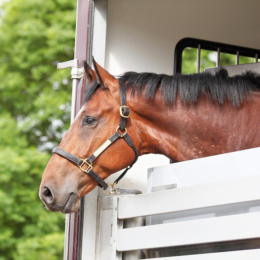 Retour à l'écurie après les vacances du cheval