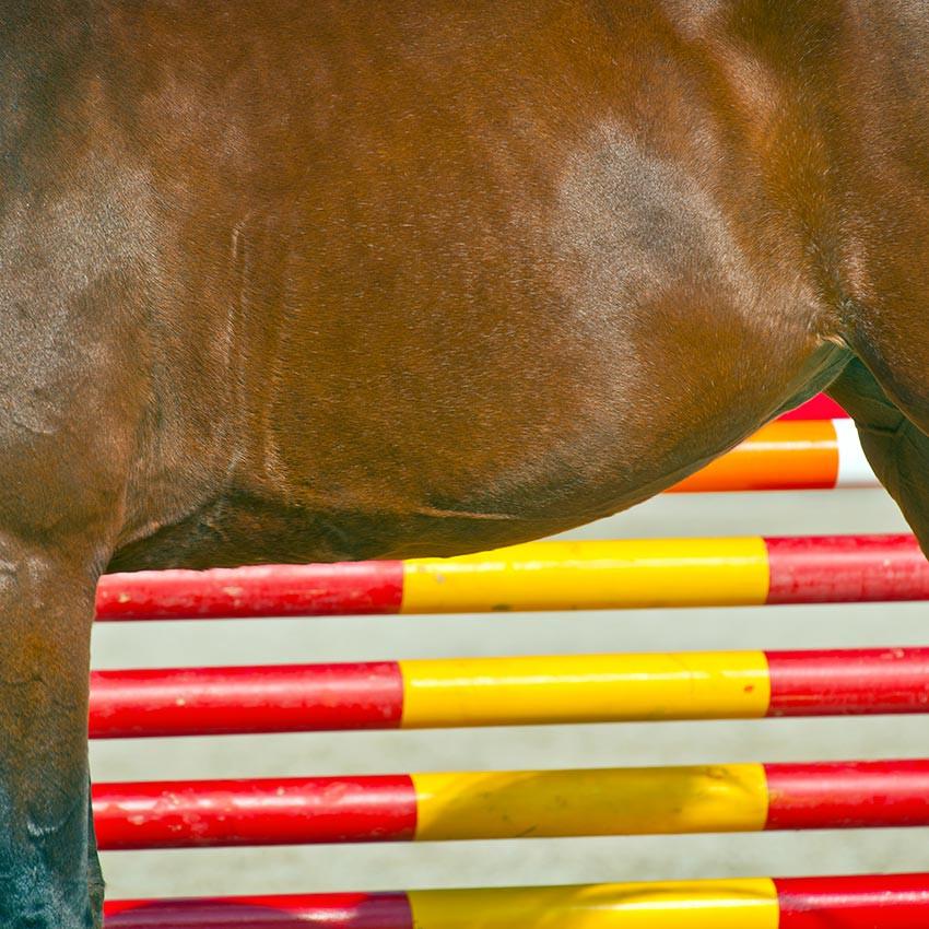 Foie et reins chez le cheval : comment soutenir ces organes d'élimination