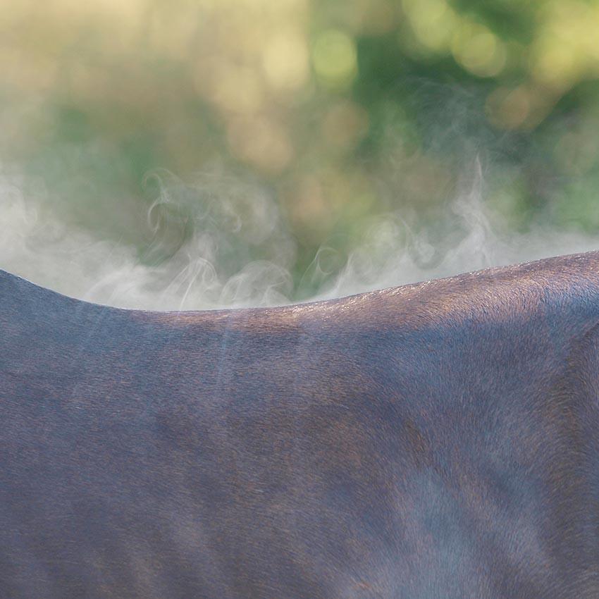 Électrolytes pour cheval : tout ce qu'il faut savoir