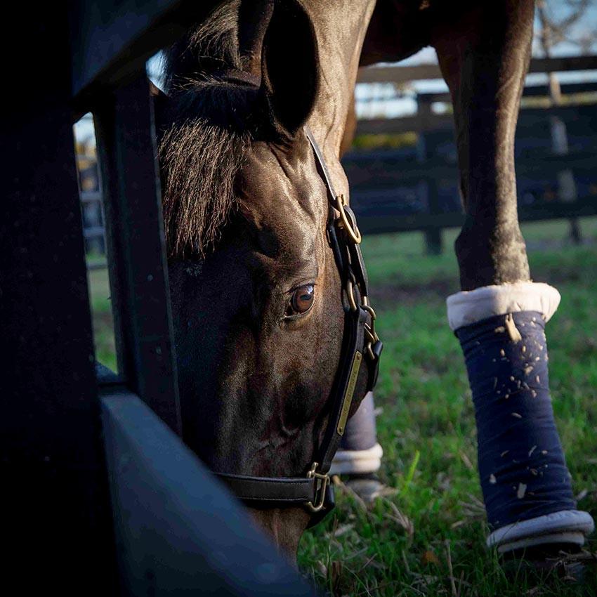 Tuto Vidéo : L'argile, comment l'utiliser avec votre cheval