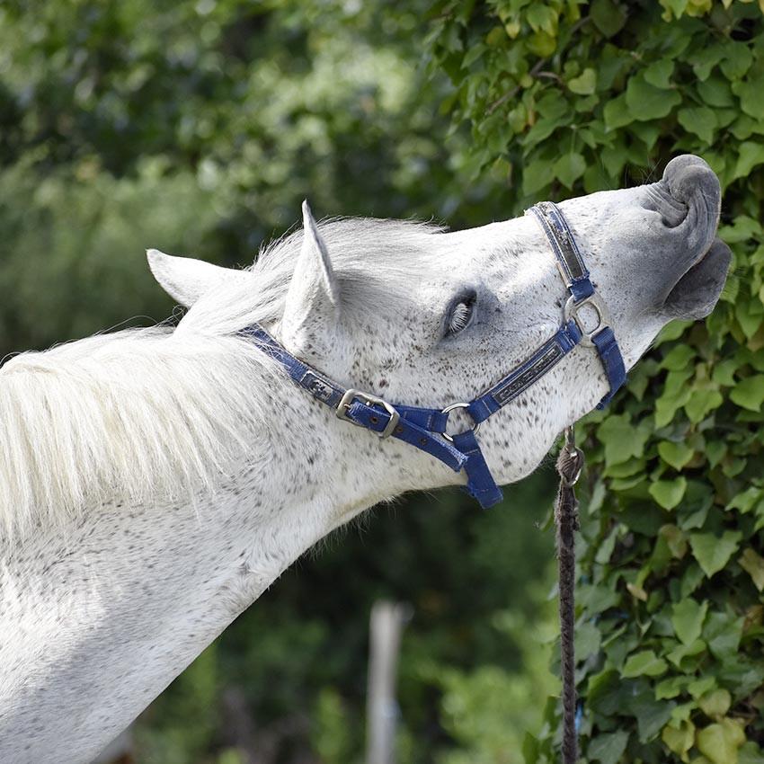 Mélanome chez le cheval : causes et traitements