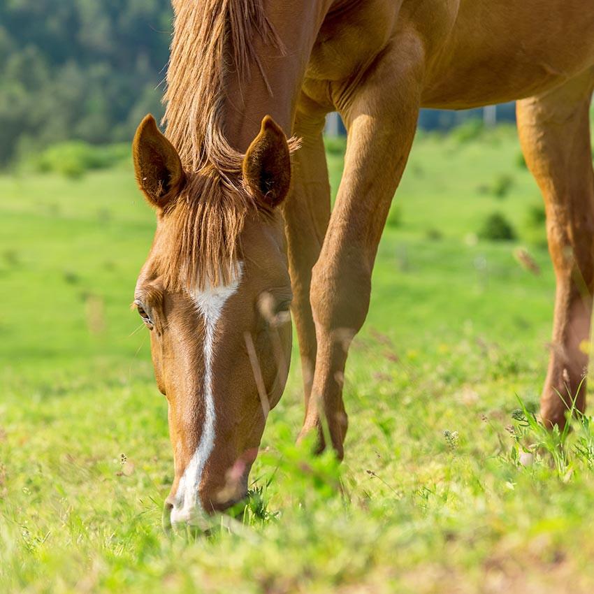 Vermifuger son cheval : comprendre et agir