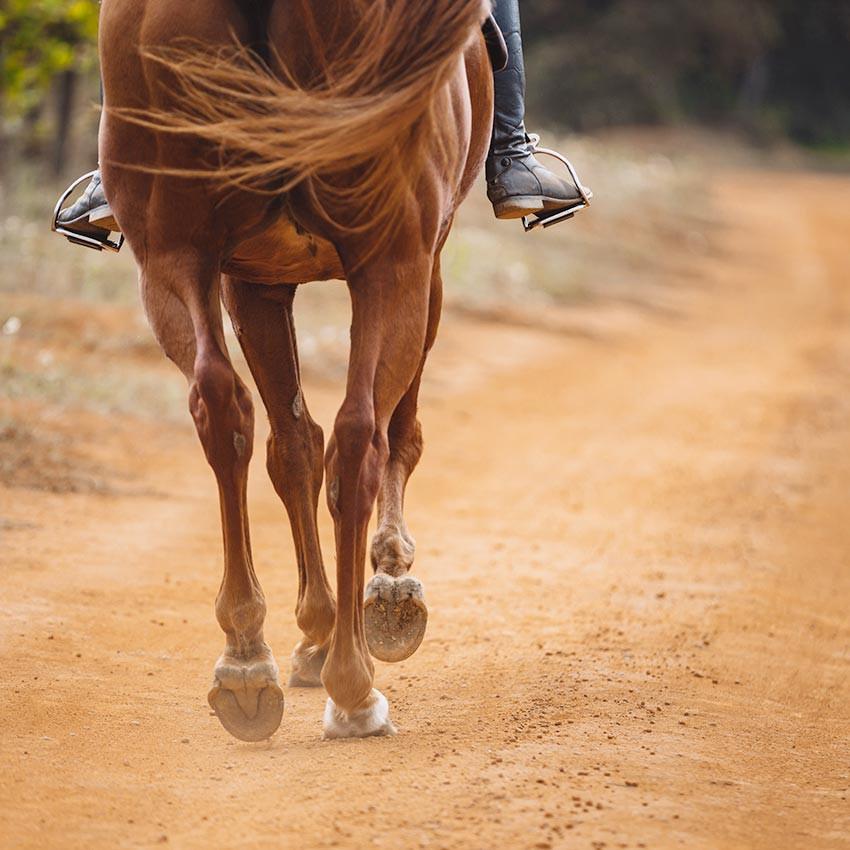 De tekortkomingen van het paard: het begrijpen van de gebreken in het loodgieterswerk van het paard