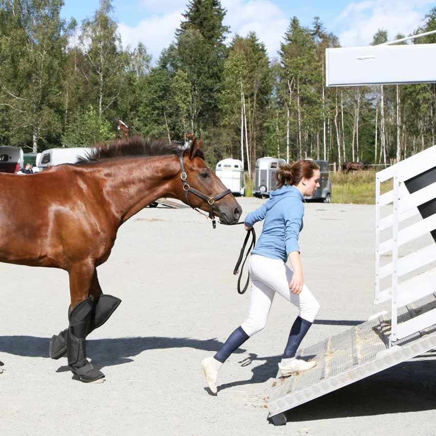 Transport du cheval : apporter confort et sécurité