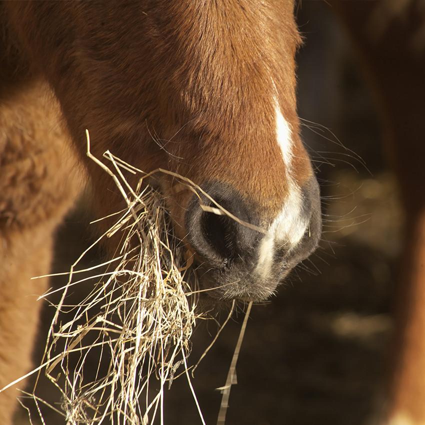 Le rendez-vous experts #1 : l'alimentation du cheval